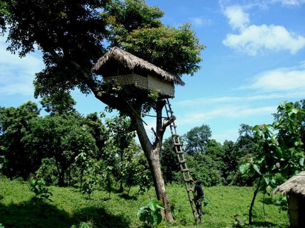 balpakram-forest-tree-house