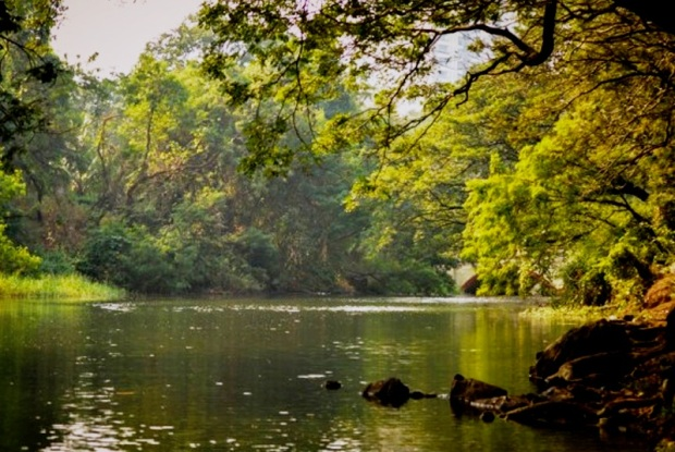 lake-inside-the-sanjay-gandhi-national-park