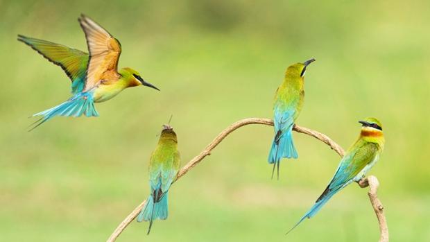 wildlifeindia-2